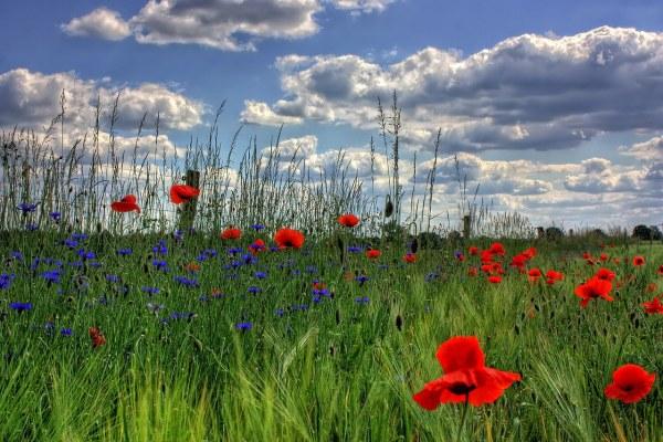 Vitagro wilde bloemen